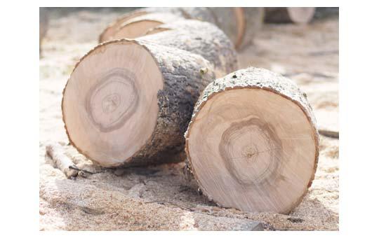 עצים יבשים לקמין